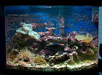 Coral Reef Aquariums